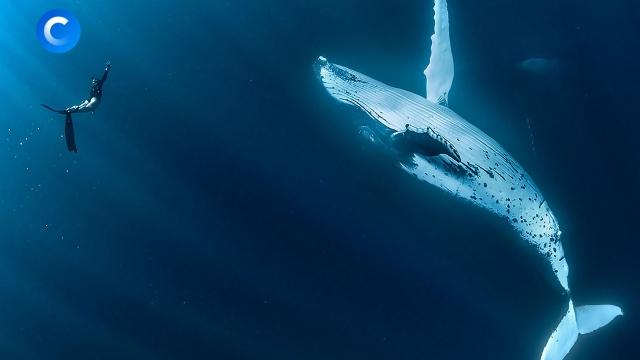 Умные изагадочные: почему вымирают киты