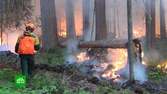 Сибирь вогне: новые очаги лесных пожаров возникают каждый день.Сибирь, лесные пожары.НТВ.Ru: новости, видео, программы телеканала НТВ