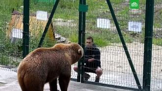 В Калужской области подросток плюнул в морду доброму медведю Мансуру