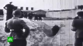«Головы младенцев разбивали остены»: чудовищные свидетельства зверств нацистов