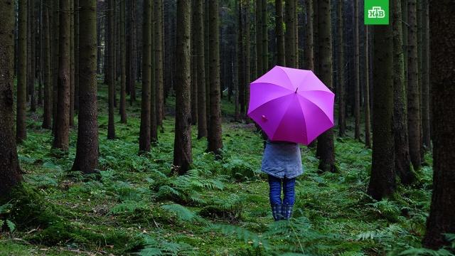 Выжить влесу: что делать, если вы заблудились.ЗаМинуту, лес, МЧС.НТВ.Ru: новости, видео, программы телеканала НТВ