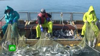 Ив дождь, ив ветер: российские рыбаки отмечают профессиональный праздник на работе