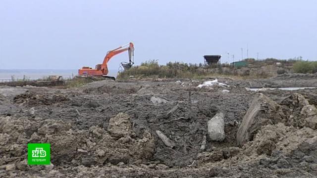 Росприроднадзор выясняет, кто превратил берег Финского залива в гигантскую свалку.Санкт-Петербург, мусор, расследование, экология.НТВ.Ru: новости, видео, программы телеканала НТВ