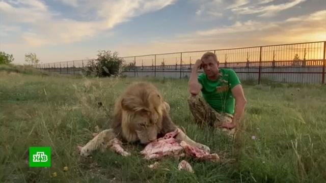 Суд оштрафовал владельца парка «Тайган» за укушенную львом клиентку.Крым, аресты, животные, зоопарки, львы, приговоры, суды.НТВ.Ru: новости, видео, программы телеканала НТВ