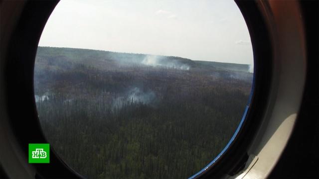 Около 40 очагов лесных пожаров ликвидировали в Сибири и на Дальнем Востоке.Дальний Восток, Сибирь, лесные пожары.НТВ.Ru: новости, видео, программы телеканала НТВ