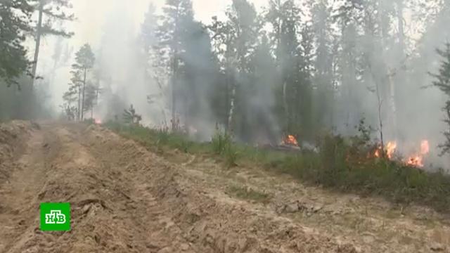 На Чукотке потушили все лесные пожары.Чукотка, лесные пожары.НТВ.Ru: новости, видео, программы телеканала НТВ