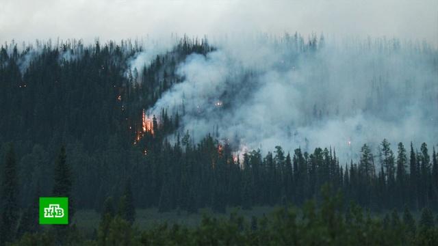 В Якутии перебравшийся через реку лесной пожар подошел вплотную к поселку.Чукотка, Якутия, лесные пожары.НТВ.Ru: новости, видео, программы телеканала НТВ