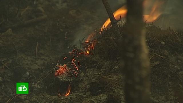 Спасатели остановили лесной пожар в700метрах от якутского села.Чукотка, Якутия, лесные пожары.НТВ.Ru: новости, видео, программы телеканала НТВ