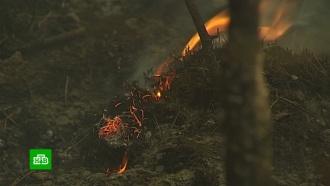 Спасатели остановили лесной пожар в700метрах от якутского села