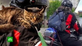 Иркутский кот-байкер осваивает сноуборд