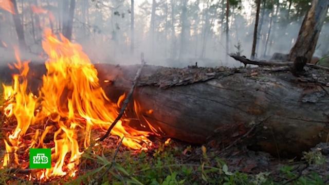 ВЯкутии верховой пожар перекинулся через реку иуничтожил линии электропередачи.Якутия, лесные пожары.НТВ.Ru: новости, видео, программы телеканала НТВ
