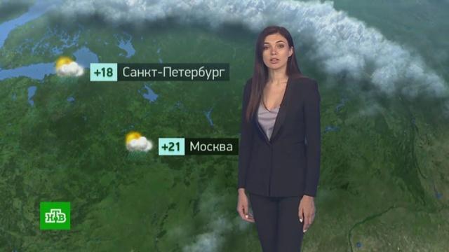Утренний прогноз погоды на 31июля.погода, прогноз погоды.НТВ.Ru: новости, видео, программы телеканала НТВ