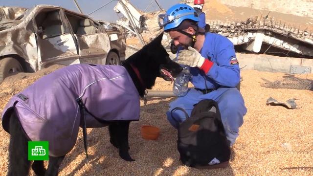 Российские спасатели надеются найти выживших вподвалах Бейрута.взрывы, Ливан, МЧС, поисковые операции.НТВ.Ru: новости, видео, программы телеканала НТВ