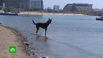 Бездомный пес вКазани очищает берег реки от мусора, камней имертвой рыбы