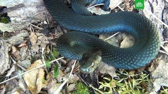 Укус сядом: что делать при нападениях змей