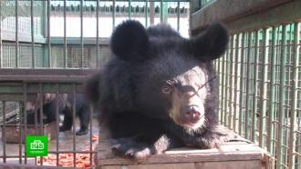 Зоозащитники «Велеса» выкупили уцирка под Пермью гималайского медвежонка