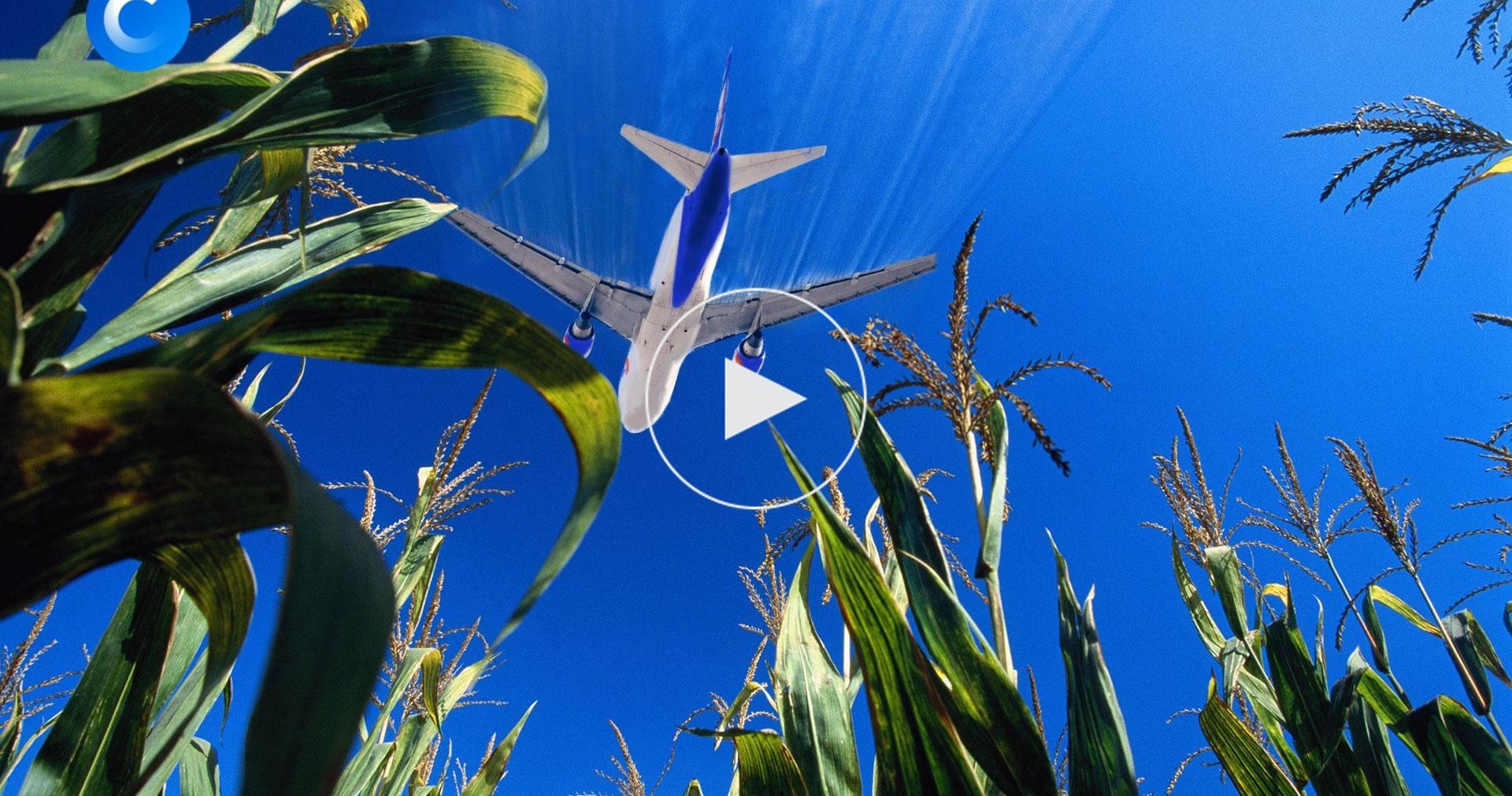 Посадка вкукурузу: годовщина аварии А321