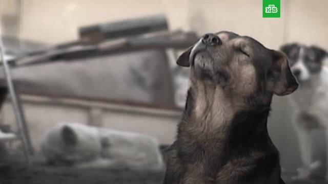 День добрых дел: как помочь бездомным животным инайти друга.благотворительность, животные, ЗаМинуту, кошки, собаки.НТВ.Ru: новости, видео, программы телеканала НТВ