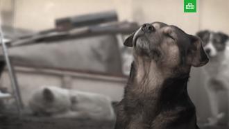 День добрых дел: как помочь бездомным животным инайти друга