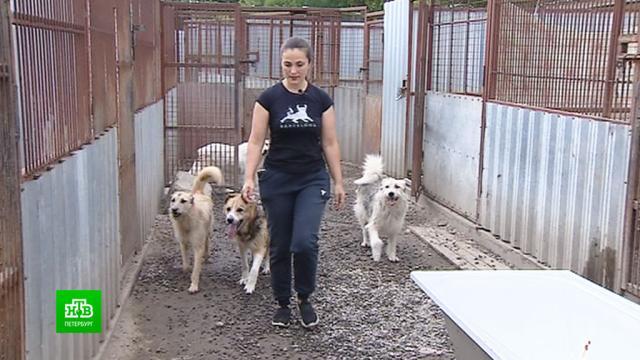 Спасители собачьих жизней: приют «Ильинка» отмечает юбилей.Санкт-Петербург, животные, приюты для животных, собаки.НТВ.Ru: новости, видео, программы телеканала НТВ