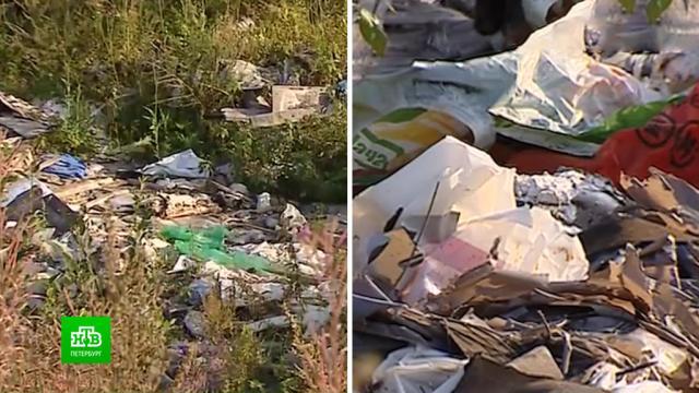 Власти Ленобласти решают, как избавить Мурино от неприятных запахов.Ленинградская область, мусор, экология.НТВ.Ru: новости, видео, программы телеканала НТВ