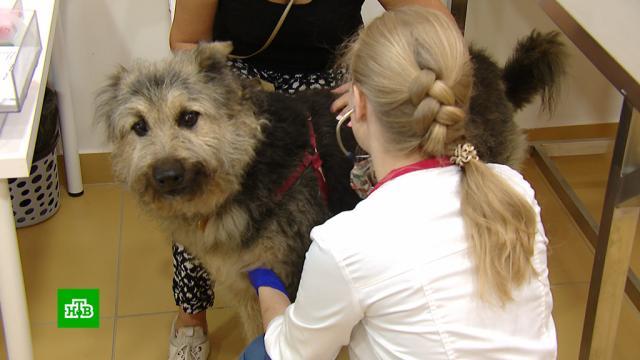 День ветеринара: методика лечения животных выходит на новый уровень.ветеринария, животные, зоопарки, кошки, собаки.НТВ.Ru: новости, видео, программы телеканала НТВ