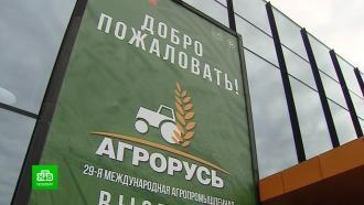 Танк из овощей иинновационный мед: «Агрорусь» распахнула двери для петербуржцев