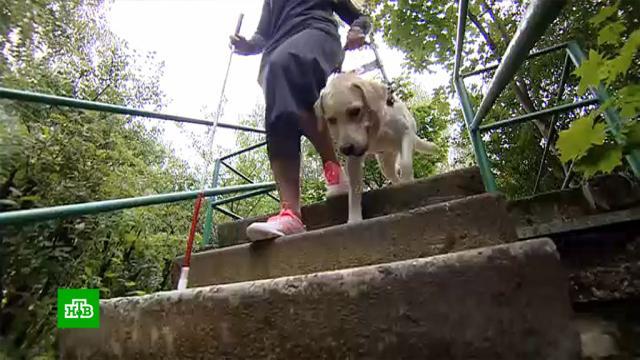Как взнаменитой российской школе готовят собак-поводырей.инвалиды, слепые, собаки, школы.НТВ.Ru: новости, видео, программы телеканала НТВ