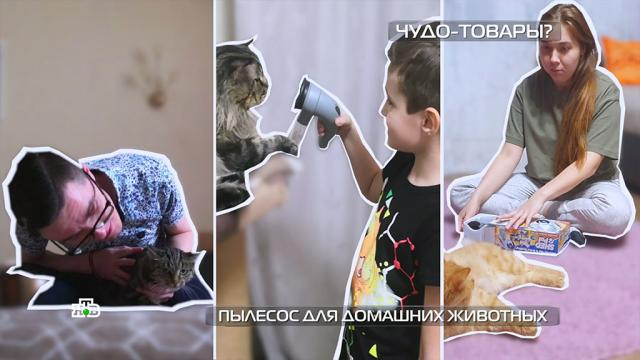 Пылесос для домашних животных: эксперимент с кошками и собаками.гаджеты, животные, изобретения, кошки, собаки.НТВ.Ru: новости, видео, программы телеканала НТВ