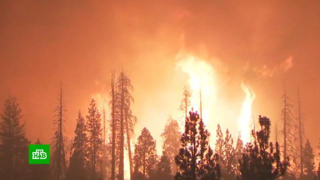 Площадь пожаров вКалифорнии превысила исторический максимум.США, жара, лесные пожары, погода, погодные аномалии, стихийные бедствия.НТВ.Ru: новости, видео, программы телеканала НТВ