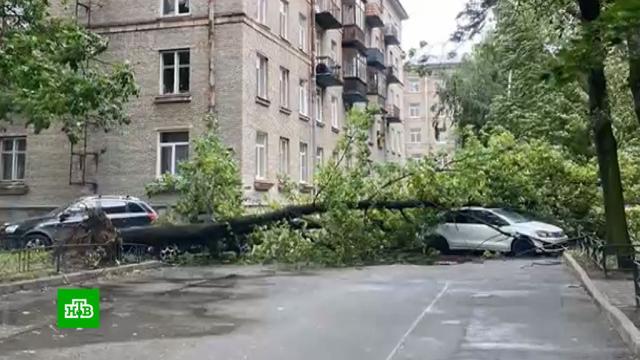 Два человека пострадали врезультате шторма вПетербурге.Санкт-Петербург, несчастные случаи, погода, штормы и ураганы.НТВ.Ru: новости, видео, программы телеканала НТВ