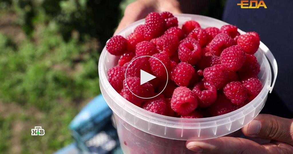 Ягодка здоровья: вчем реальная польза свежей малины