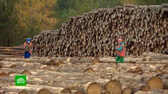 На страже природных богатств: вРоссии отмечают День работников леса