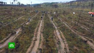 Два дерева вместо одного: на БАМе началась компенсационная экологическая программа
