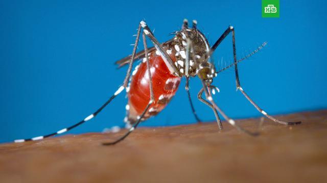 В Турции появились опасные комары.В Турции заметили азиатских тигровых комаров, которые раньше не появлялись на территории страны.насекомые, Турция.НТВ.Ru: новости, видео, программы телеканала НТВ