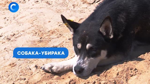 Made in Russia: выморозка.НТВ.Ru: новости, видео, программы телеканала НТВ