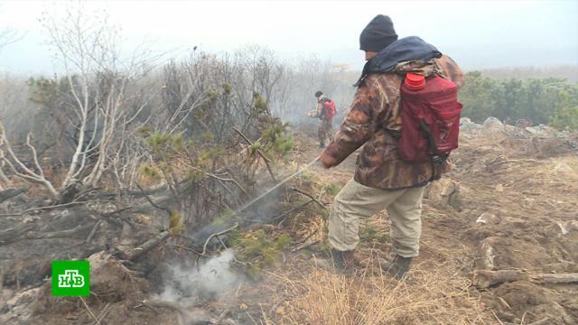 На Колыме люди задыхаются от дыма лесных пожаров.Магадан, животные, лесные пожары, пожары.НТВ.Ru: новости, видео, программы телеканала НТВ