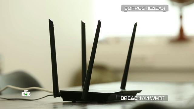 Беспроводная угроза: вредитли здоровью Wi-Fi.НТВ.Ru: новости, видео, программы телеканала НТВ
