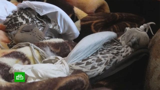 В Иркутске охотники ловили краснокнижных птиц для иностранцев.Полицейские в Иркутске задержали браконьеров, у которых жили в ужасных условиях краснокнижные птицы — сапсан и балобан. У птиц не было воды и еды, а браконьеры связали их и спрятали в диван, чтобы потом вывезти за рубеж.Иркутск, Красная книга, браконьерство, полиция, птицы.НТВ.Ru: новости, видео, программы телеканала НТВ
