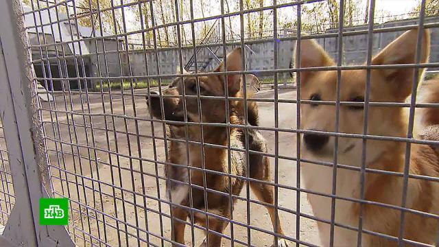 ВШереметьево COVID-носителей будут выявлять служебные собаки.здравоохранение, животные, медицина, собаки, болезни, осень, эпидемия, коронавирус.НТВ.Ru: новости, видео, программы телеканала НТВ