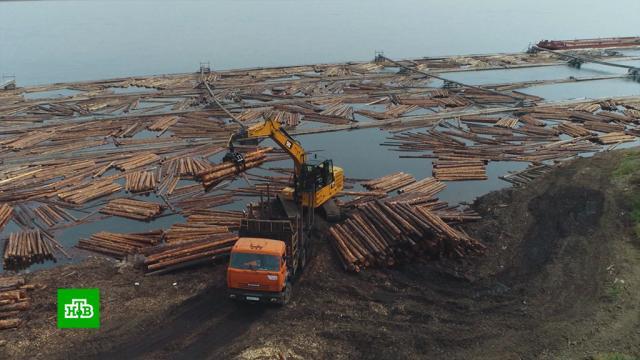 Обрубают на корню: цифровые технологии помогут вборьбе счерными лесорубами.Путин, лес, экология.НТВ.Ru: новости, видео, программы телеканала НТВ