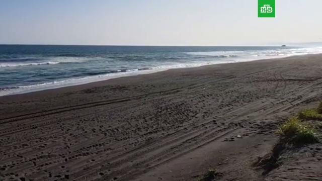Минприроды Камчатки показало на видео «совершенно чистый» Халактырский пляж.НТВ.Ru: новости, видео, программы телеканала НТВ