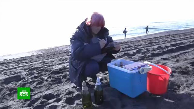Пробы воды из отравленной камчатской бухты отправили вМоскву.Камчатка, разлив нефтепродуктов и химикатов, экология.НТВ.Ru: новости, видео, программы телеканала НТВ