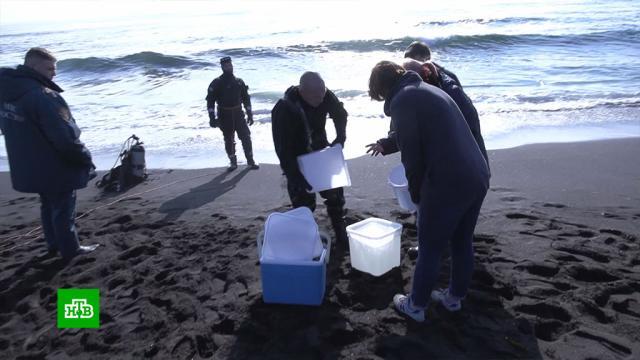Власти Камчатки опровергли версию опопадании токсинов взалив из реки.Камчатка, разлив нефтепродуктов и химикатов, экология.НТВ.Ru: новости, видео, программы телеканала НТВ