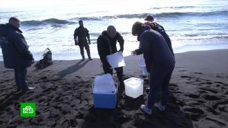Власти Камчатки опровергли версию опопадании токсинов взалив из реки