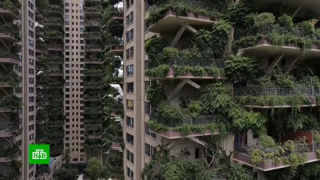 Экологичные небоскребы в Китае превратились в декорации для фильмов ужасов.Китай, жилье, растения, строительство, экология.НТВ.Ru: новости, видео, программы телеканала НТВ