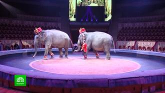 Пандемия исорванные гастроли привели кконфликту впетербургском цирке на Фонтанке