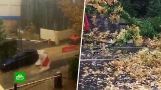 Пловца на улице вСочи сняли на видео