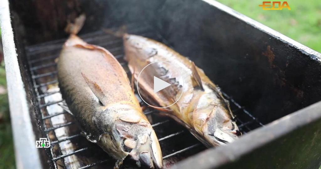 Копченая рыбка: уникальные свойства скумбрии