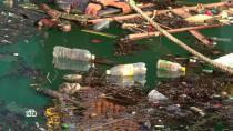 Рыба и чайные пакетики: как микропластик проникает в организм.здоровье, технологии, химия, экология.НТВ.Ru: новости, видео, программы телеканала НТВ